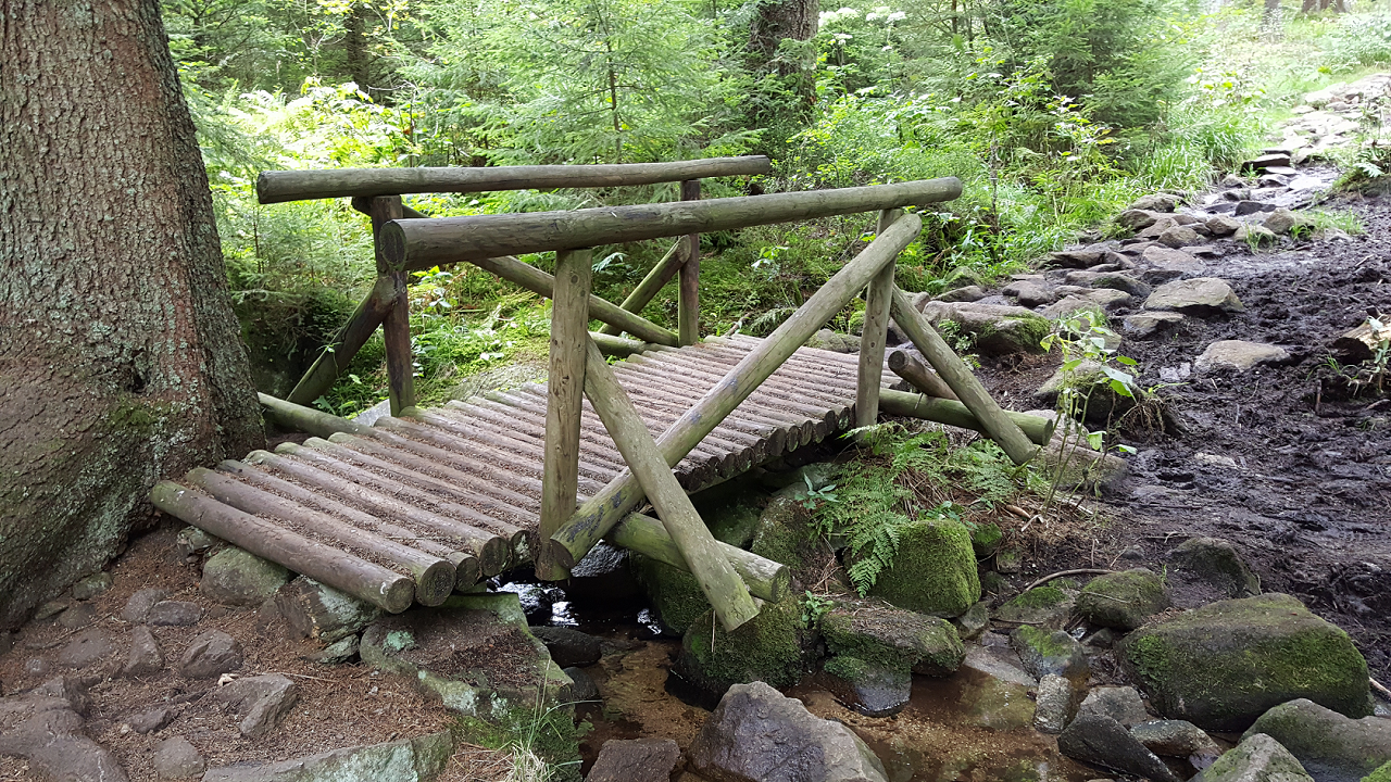 Picture showing a bridge in the jungle